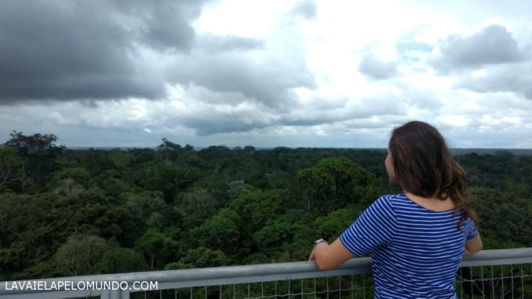 Musa – Museu da Amazonia